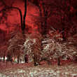 Stock Photo: Snowy winter park at night