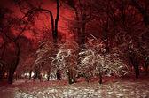 Parque de invierno cubierto de nieve durante la noche. — Foto de Stock