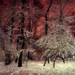 Trees and shrubs in the snow in a park in winter night — Stock Photo