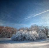 Frosty winter day — Stock Photo