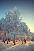 Frosty winter day — Foto Stock