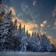 Winter snowy forest in the square — Stock Photo #26159849