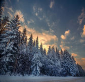 Winter snowy forest in the square — Stock Photo