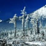 Winter trees — Stock Photo #14380429