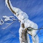 Winter tree — Stock Photo #14382161