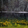 Vrbicke pleso - Stock Photo