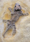 Fossils — Stock Photo