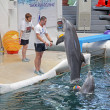 Stock Photo: Dolphins in dolphinarium Varna, Bulgaria