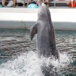 Stock Photo: Dolphins in dolphinarium