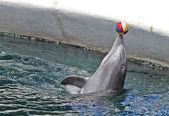 Dolphins in dolphinarium — Stockfoto