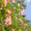 Spring - flowering tree — Stock Photo