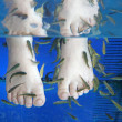 Stock Photo: Doctor fish - fishspa