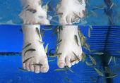 Doctor fish - fisha spa — Stockfoto