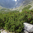 Lomnicky stit - peak in High Tatras, Slovakia — Stock Photo