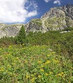 Mala studena dolina - valley in High Tatras, Slovakia — Stock Photo