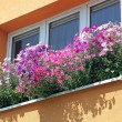 Stock Photo: Flowers at window