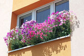 Flowers at window — Stock Photo