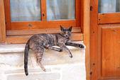 Bored cat — ストック写真