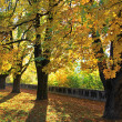 Stock Photo: Autumn at park