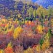 Stock Photo: Autumn at High Tatras mountains, Slovakia