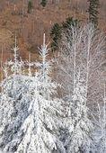 Nature dans les hautes tatras, slovaquie — Photo