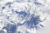 Snowy nature — Stock Photo