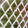 Frost on the fence — Stock Photo