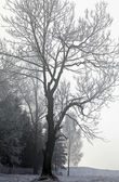 Tree and fog — Stock Photo