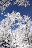 Snowy trees in High Tatras, Slovakia — Stock Photo