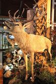 Real stuffed deer — Stock Photo