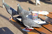 Hungry pigeons in the fast food - Rotterdam, Netherlands — Stock Photo
