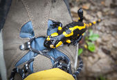 Fire Salamander on hiking boots — Stock Photo