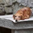 Lonely dog — Stock Photo