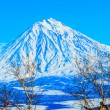 Stock Photo: Russia, KamchatkPeninsula. Freeride skiing on volcanoes.