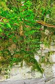 Relict yew-tree grove on the mount Akhun. — Stock Photo