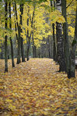 Autumn Park in Moscow region. — Stock Photo