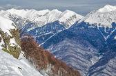 Olympic ski trail Rosa Khutor. — Stockfoto