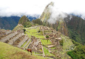 Inca rules — Stock Photo