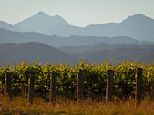 Vinyard mountain backdrop — Stock Photo