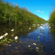 Stock Photo: Typical dutch polder ditch seen from just above waterline with pond water-crowfoot in front