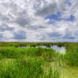 Stock Photo: Natural marshland