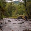Faded forest stream — Stock Photo