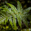 Fern leaf catching sunbeam — Stock Photo #14686057