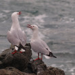 Socializing gulls — Stock Photo