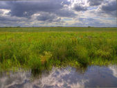 Dutch polder landscape — Stock Photo