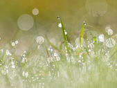 Morning dew in meadow — Stock Photo