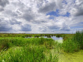 Natural marshland — Stock Photo