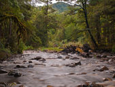 Bleknat forest stream — Stockfoto