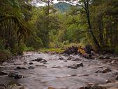 Wyblakłe lasów strumienia — Zdjęcie stockowe