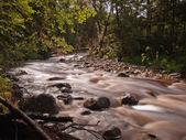 Orman akarsu soluk — Stok fotoğraf